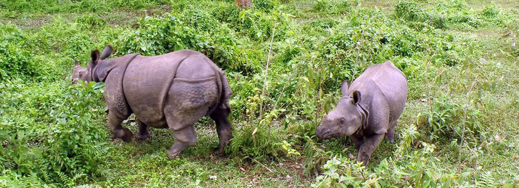 Jungle Safari In Bardia National Park