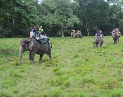 WildLife Safari In Koshi Tappu 5 Days